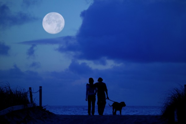 Couple on beach walk with pet dog