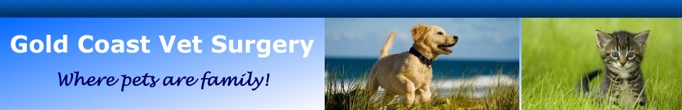 Gold_Coast_Vet_Surgery